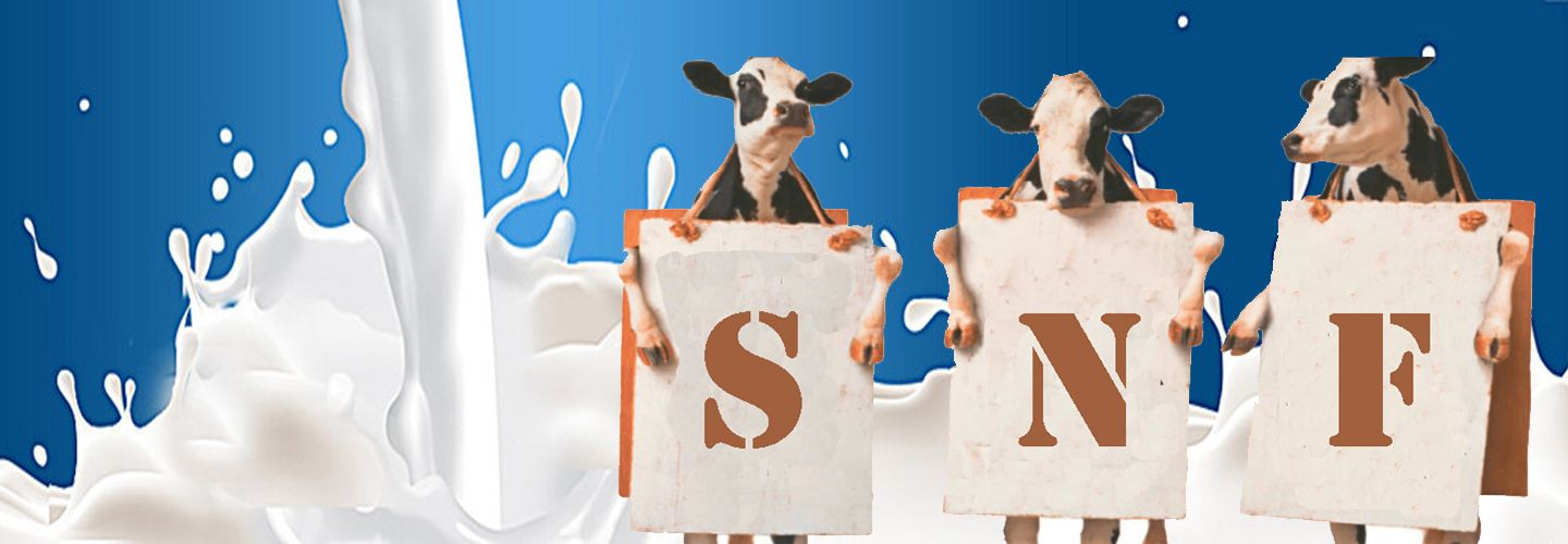 How to increase SNF in Milk Production, Know about SNF