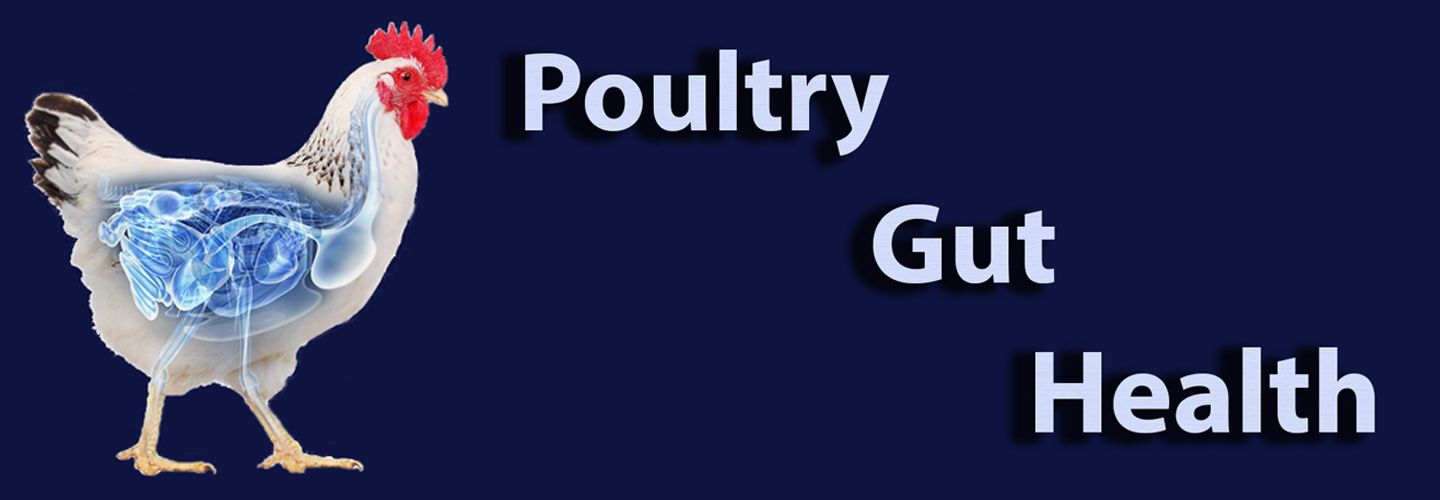 Steps Towards Salubrious Poultry Gut - VIV Online