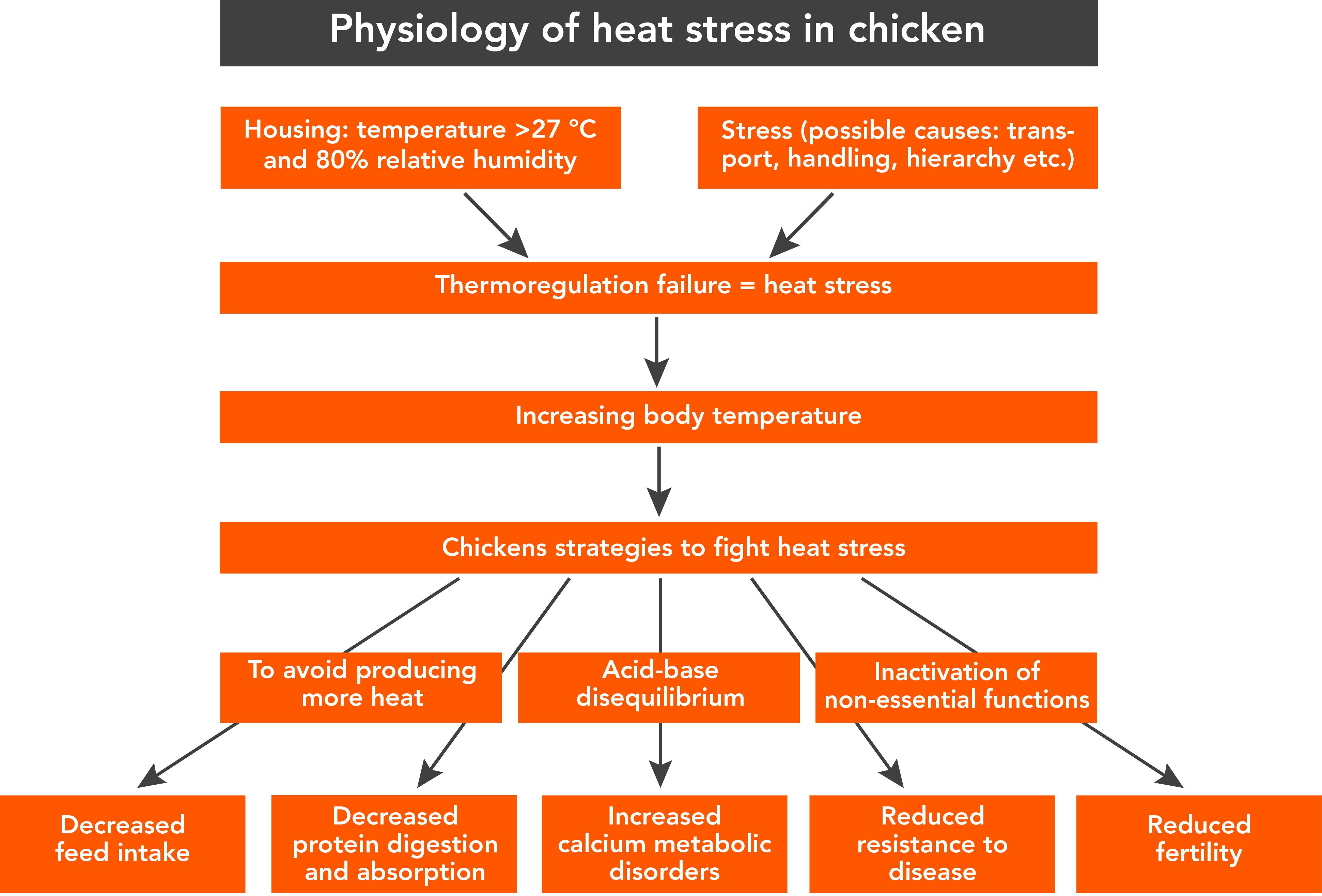 Physiology%20of%20heat%20stress%20in%20chicken_1518790401.jpg